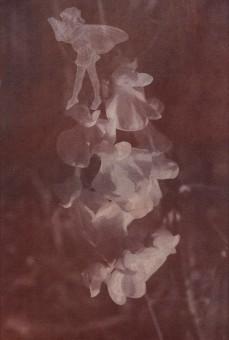 Andrea Brächer, sem título, 2019, série A vinda das fadas, photogenic drawing, 18 x 12 cm, # (6)
