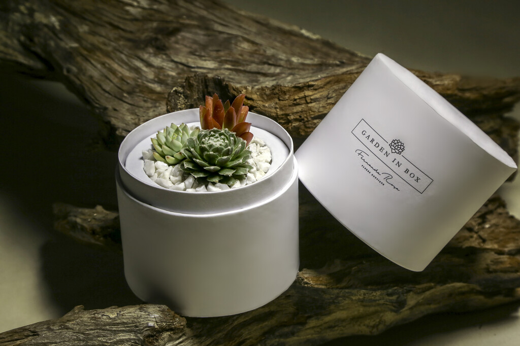 Garden in Box por Fernanda Rosa Flores Boutique - foto Fabio Martins (4)